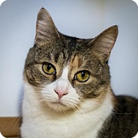 Adopt A Pet :: Emily Rose (and Norman) - Fairfax, VA
