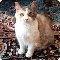 Adopt A Pet :: Nena - New York, NY