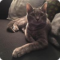 Adopt A Pet :: Earl - Rochester Hills, MI