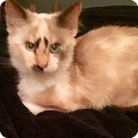 Adopt A Pet :: Opal - Burlingame, CA