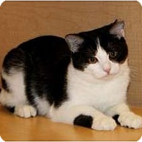 Adopt A Pet :: Mina - Nolensville, TN