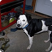 Adopt A Pet :: Jinx - Chewelah, WA