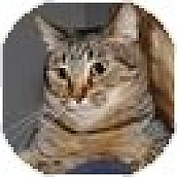Adopt A Pet :: Tinkerbell - Monroe, GA