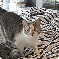 Adopt A Pet :: Angel - Jeffersonville, IN
