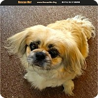 Adopt A Pet :: SQUISH - SO CALIF, CA