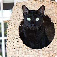 Adopt A Pet :: Milo (Fran) - Homestead, FL