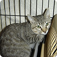 Adopt A Pet :: Tiggie - Mundelein, IL