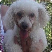 Adopt A Pet :: Graham - Cleveland, OH