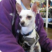 Adopt A Pet :: Biscotti - Van Nuys, CA