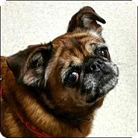 Adopt A Pet :: MISS MOLLY - ADOPTION PENDING - Seymour, MO