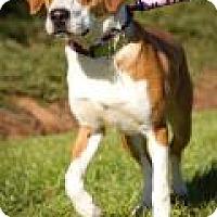 Adopt A Pet :: Red - Irmo, SC