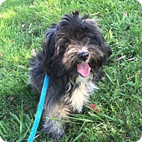 Adopt A Pet :: Winston - Mission Viejo, CA