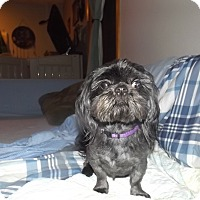 Adopt A Pet :: Blackie - Quincy, IN