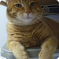 Adopt A Pet :: Mick Jagger - Hamburg, NY