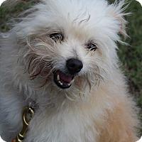 Adopt A Pet :: Custard - Waldorf, MD