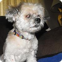 Adopt A Pet :: Lola - Ft. Collins, CO
