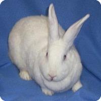 Adopt A Pet :: Nellie - Woburn, MA