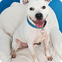 Adopt A Pet :: Brutus - Roanoke, VA