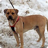 Adopt A Pet :: Cash - Shelby, MI