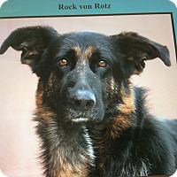 Adopt A Pet :: ROCK VON ROTZ - Los Angeles, CA
