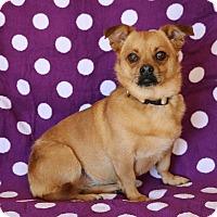 Adopt A Pet :: Bella - Yucaipa, CA