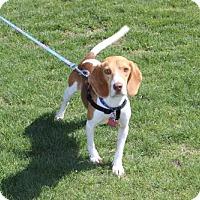 Adopt A Pet :: PJ - Mansfield, TX