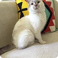 Adopt A Pet :: Tropicana - Addison, IL