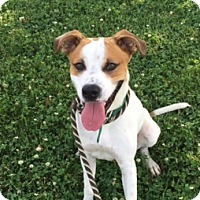 Adopt A Pet :: Buster - St. Charles, MO