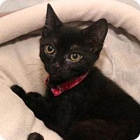 Adopt A Pet :: Pal - Wilmington, NC