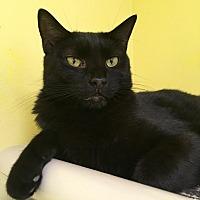 Adopt A Pet :: Kat - Stevensville, MD