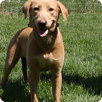 Adopt A Pet :: Bonnie - Brattleboro, VT