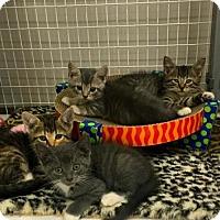 Adopt A Pet :: Matthew, Mark, Luke, John, Sara & Mother Mary Litt - Mattoon, IL