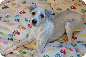 Poodle (Miniature) Mix Dog for adoption in Agoura Hills, California - 'LOLA'