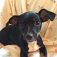 Adopt A Pet :: AA Remy - McCormick, SC
