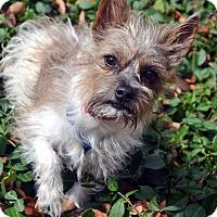Adopt A Pet :: Tito - Bridgeton, MO