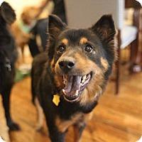Adopt A Pet :: Diane von Furstenberg - Brooklyn, NY
