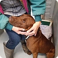 Adopt A Pet :: De'Angelo - Las Vegas, NV