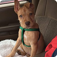 Adopt A Pet :: Max - New Oxford, PA