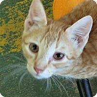 Adopt A Pet :: Wizard - Gonzales, TX