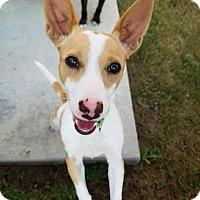 Adopt A Pet :: Luna - San Antonio, TX