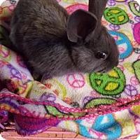 Adopt A Pet :: Aurora - Kenosha, WI