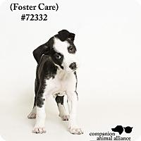 Adopt A Pet :: Phoebe  (Foster Care) - Baton Rouge, LA