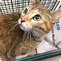 Adopt A Pet :: A422310 - San Antonio, TX