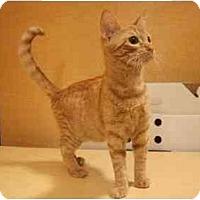Adopt A Pet :: Nemo - Orlando, FL