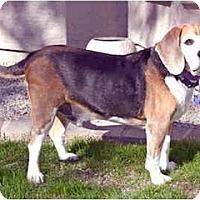 Adopt A Pet :: Spanky - Phoenix, AZ