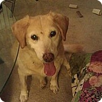 Adopt A Pet :: Honey - Cheshire, CT