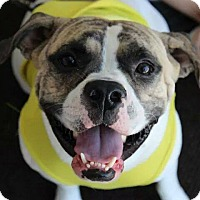 Adopt A Pet :: June Bug - Shrewsbury, NJ