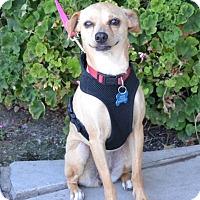 Adopt A Pet :: Sunshine - Van Nuys, CA