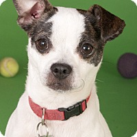 Adopt A Pet :: Monkey - Chicago, IL