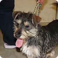 Adopt A Pet :: Scrappy - Brattleboro, VT